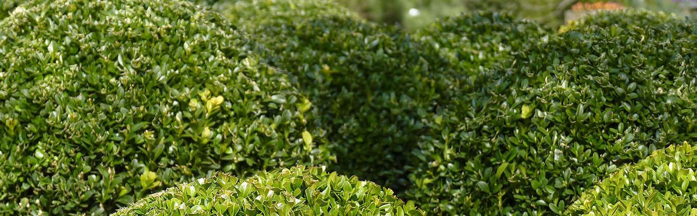 Heckenpflanzen-schönste Gartengrenzen